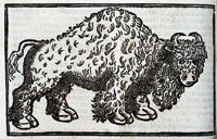 Buffalo, Archive of Early American Images